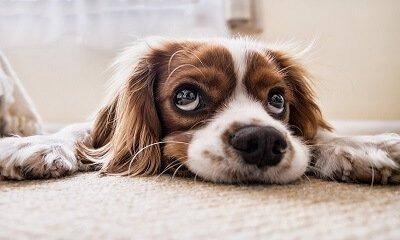 Hundehaftpflicht Vergleichsrechner